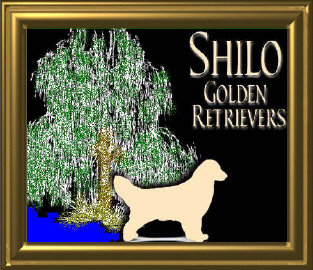 shilo_website001015.jpg